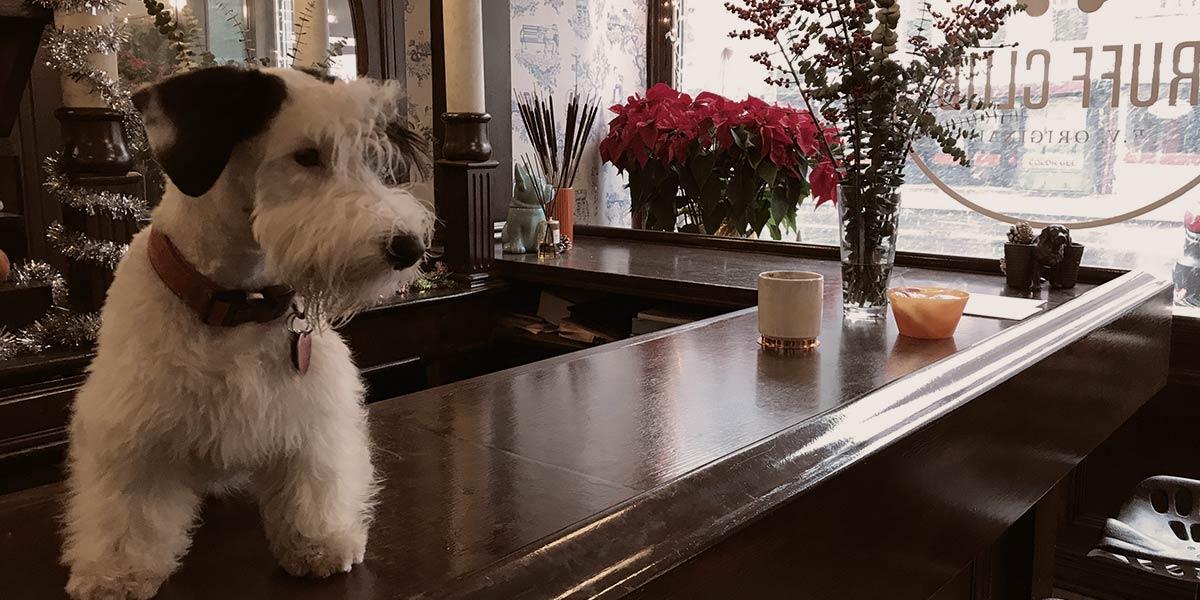Ruff Club Interior with Dog