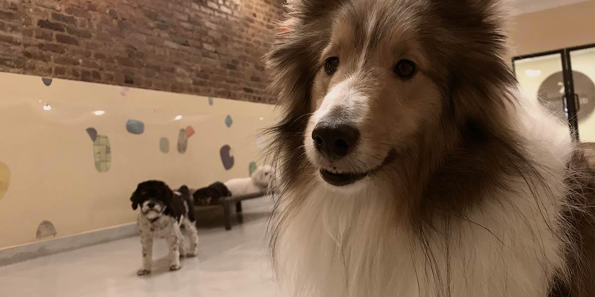 Ruff Club Curious Dogs