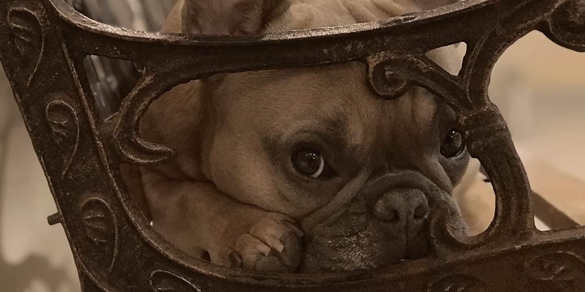 Ruff Club Dog on Chair